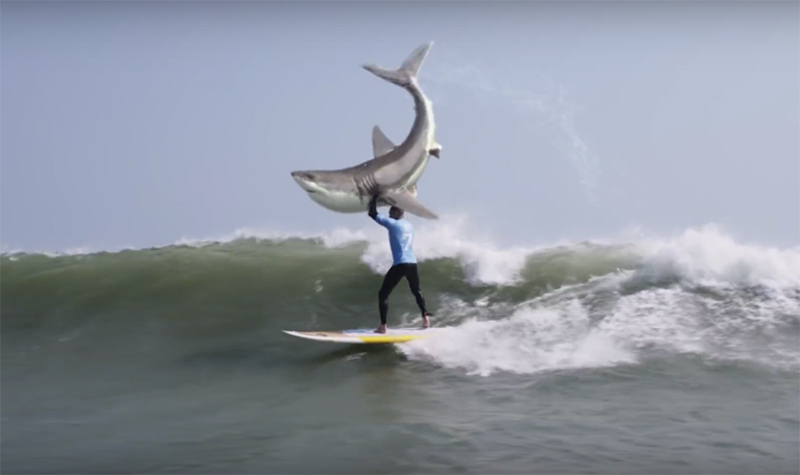 Pro Surfer Fights Off Shark In South Africa Spoof Zigzag