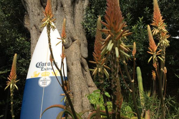 featured-corona-board-giveaway