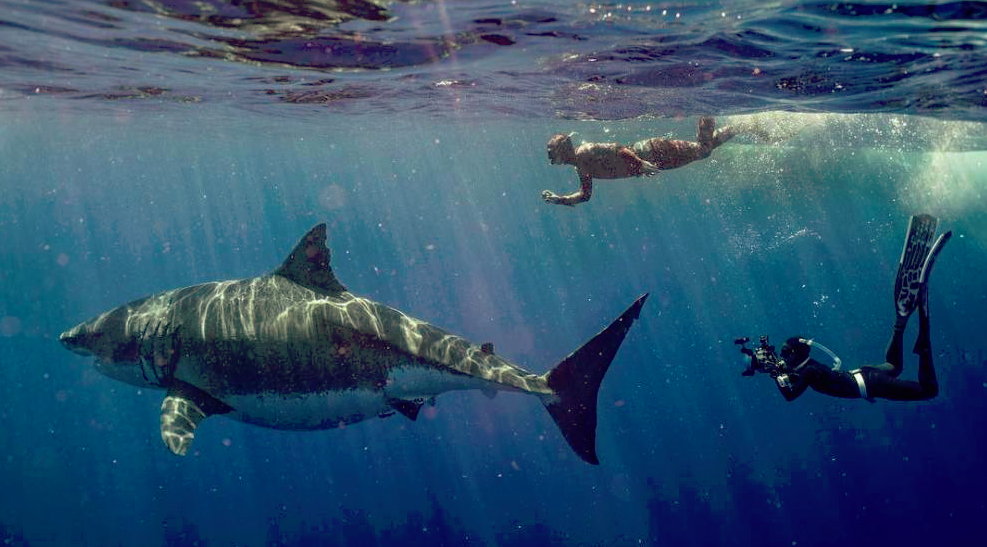 'Deep Blue' 20ft White Shark Spotted in Hawaii